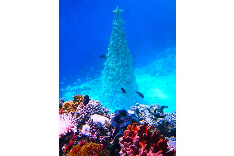 Upside down desert and underwater its Christmas time 14 12 17 4
